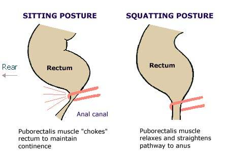 sitting vs squatting