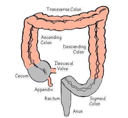 colon, intestines