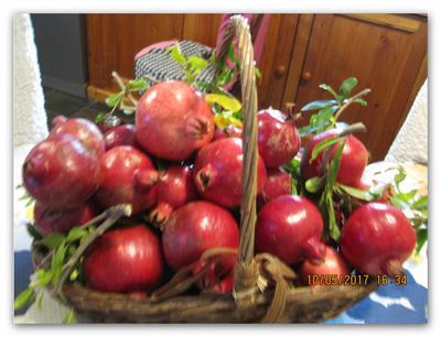 freshly picked pomegranates